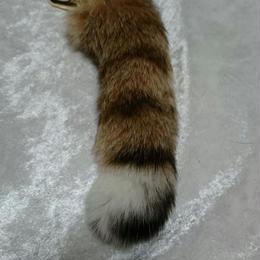 山猫の尻尾チャーム