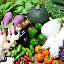 おまかせ野菜セット・Mサイズ・2~4人向け