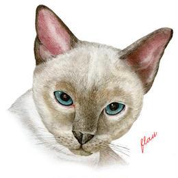flau cat - Tote bag