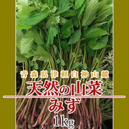【早期予約】【天然山菜】青森県津軽白神山麓 「赤みず」1Kg