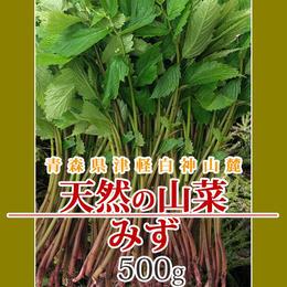 【早期予約】【天然山菜】青森県津軽白神山麓 「赤みず」500g