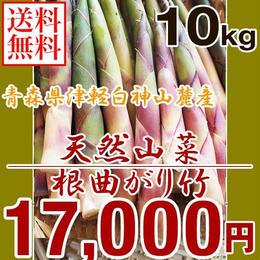 【早期予約】【天然山菜】青森県津軽白神山麓 「根曲がり竹」10Kg