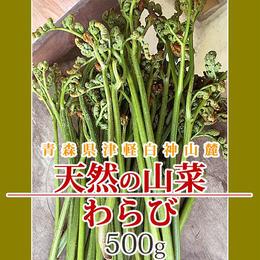 【早期予約】【天然山菜】青森県津軽白神山麓 「わらび」500g