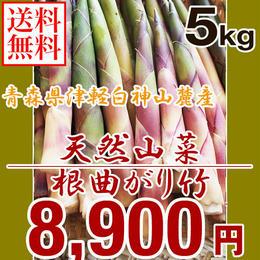 【早期予約】【天然山菜】青森県津軽白神山麓 「根曲がり竹」5Kg
