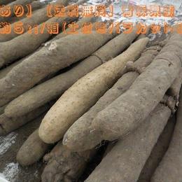 【訳あり】【送料無料】青森県産 長芋 約5kg/箱(土付きバラカット詰め)
