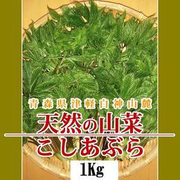 【早期予約】【天然山菜】青森県津軽白神山麓 「こしあぶら」1Kg