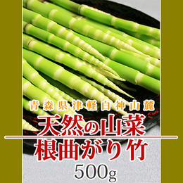 【早期予約】【天然山菜】青森県津軽白神山麓 「根曲がり竹」500g