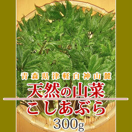 【早期予約】【天然山菜】青森県津軽白神山麓 「こしあぶら」300g