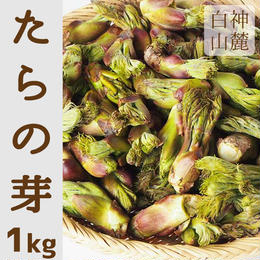 【早期予約】【天然山菜】青森県津軽白神山麓 「たらの芽」1Kg