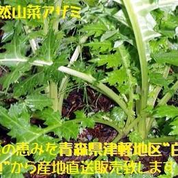 【早期予約】【天然山菜】青森県津軽白神山麓 「あざみ」300g
