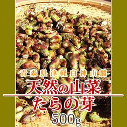 【早期予約】【天然山菜】青森県津軽白神山麓 「たらの芽」500g