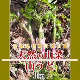 【早期予約】【天然山菜】青森県津軽白神山麓 「山うど」1Kg