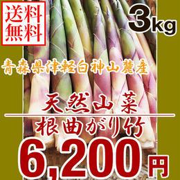 【早期予約】【天然山菜】青森県津軽白神山麓 「根曲がり竹」3Kg