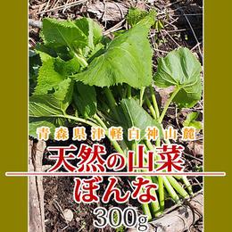 【早期予約】【天然山菜】青森県津軽白神山麓 「ぼんな」300g