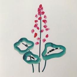 【オチアイハルカ】植物のポスターの受注販売  no.19