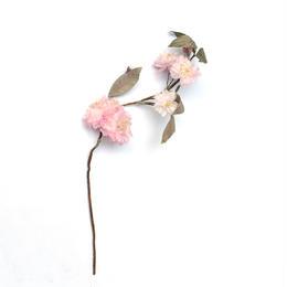 布花 八重桜 <A> / itoma × hacozen