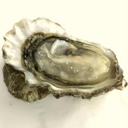 カイパラオイスター(ニュージーランド)