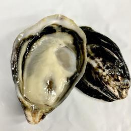 KAWAII Oyster