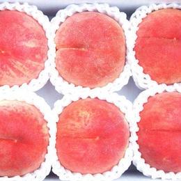 【気軽に楽しめる】 川中島白桃 2kg(5〜8玉)