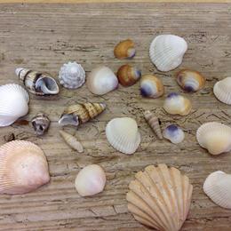 小さい貝の詰合せ