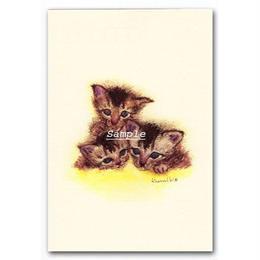猫ポストカード3