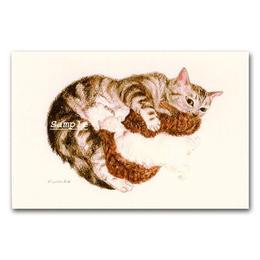 猫ポストカード10