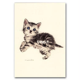 猫ポストカード20