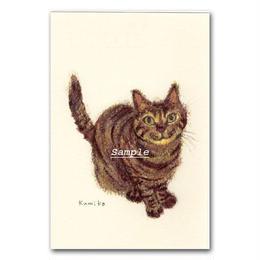 猫ポストカード11