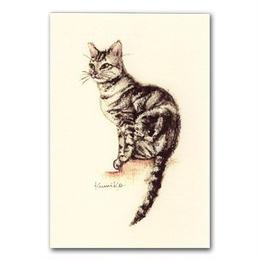 猫ポストカード6