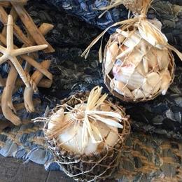 shell2type set