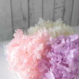 《フルオーダー》紫陽花