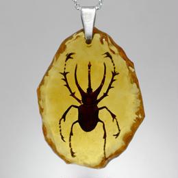 ボルネオオオカブト(beetle001)