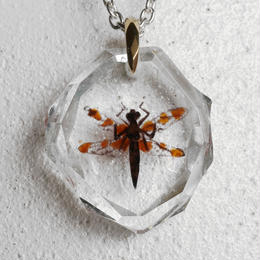 ベッコウトンボ(dragonfly012)