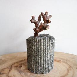 ペラルゴニム    ミラビレ no.005  Pelargonium mirabile