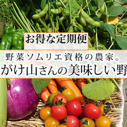 【お得な定期便】がけ山農園の野菜ボックス