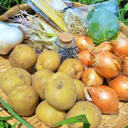 エネルギーギュぎゅっと詰まった!無農薬、無肥料、固定種CARPE DIEMの野菜ボックス