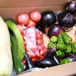赤ちゃんも安心して食べられる。無農薬・無肥料・固定種POCO A POCO FARMの野菜ボックス