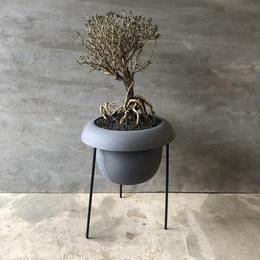 盆栽 香丁木 2 スタンド付きポット