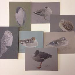 ユカワアツコ「眠る鳥」絵葉書7枚セット