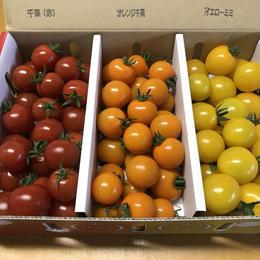 食べ比べセット(赤、オレンジ、黄) 1kg 6~7月、9~10月限定!