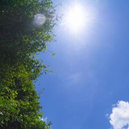 【写真×4枚セット】【400円】青空と木005~008/~4592px