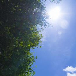 【写真×4枚セット】【無料】青空と木001~004/~800px