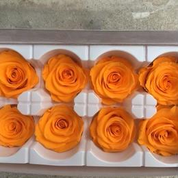 薔薇 オレンジ 1箱8輪入り (着払い)