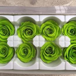 薔薇 ライトグリーン 1箱8輪入り (着払い)