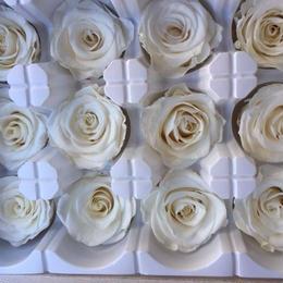 薔薇 ホワイト 白 1箱12輪入り (着払い)