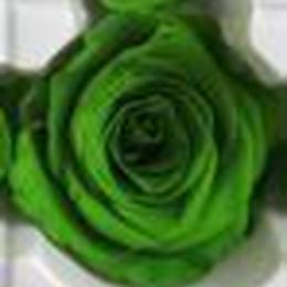 薔薇 グリーン 1輪から (着払い)