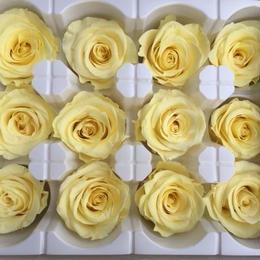 薔薇 ライトイエロー 1箱12輪入り