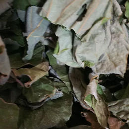 割れ葛の葉20g