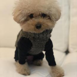 ヒサコさんの手編みベスト