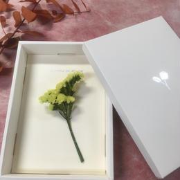 【ハンドメイドレターセット】ソフトスターチス YELLOW(P)